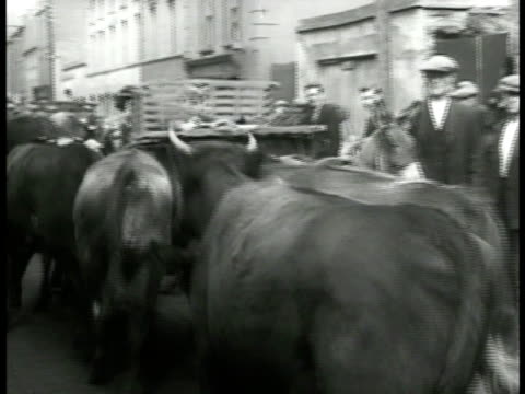 Single black calf standing alone cattle hearded in line into town two men standing on back of cart Sheep standing in street next to sidewalk Customs...