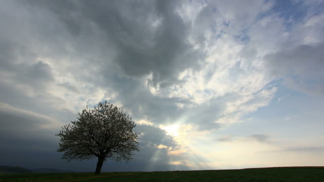 single cherry tree, during late afternoon timelapse scene of clouds moving in - single tree stock videos & royalty-free footage