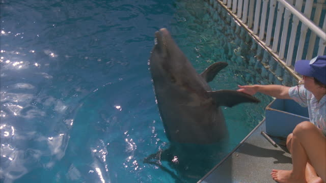 ms zi single dolphin swimming at hawaii sea life park  - sea life park stock videos & royalty-free footage