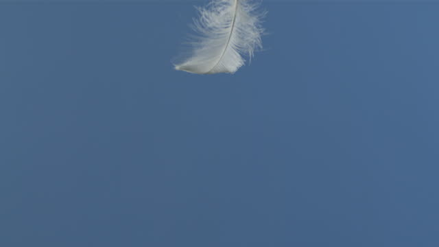 single feather falling against blue screen - feather stock videos & royalty-free footage
