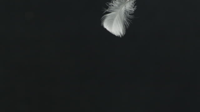 Single feather falling, black background