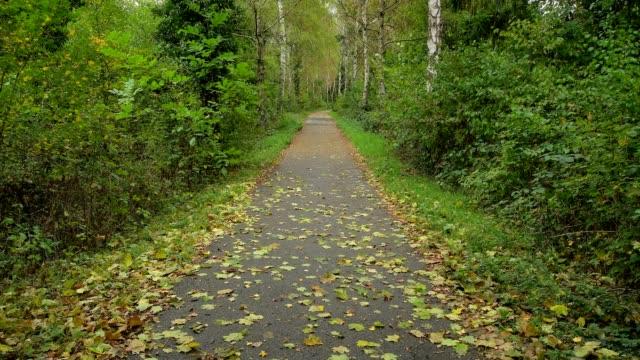 Single lane road in autumn, Mondfeld, Wertheim, Main-Tauber-Kreis, Baden-Württemberg, Germany