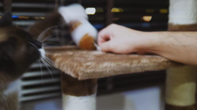 vidéos et rushes de homme simple avec son chat - propriétaire d'animal de compagnie