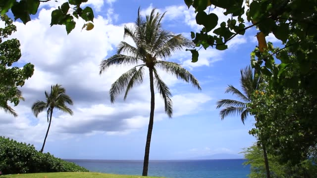 single palm tree blowing in the breeze - standbildaufnahme stock-videos und b-roll-filmmaterial