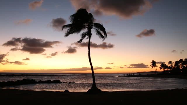 vídeos de stock e filmes b-roll de a single palm tree blowing in the wind at sunset on the island of kauai - kauai