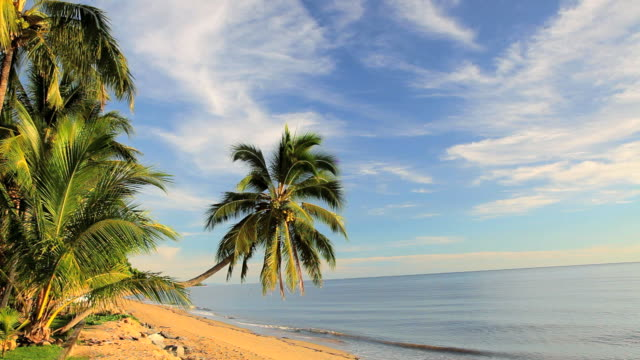 single palm tree on holloways beach nr cairns, queensland, australia, southern hemisphere, - southern hemisphere stock videos & royalty-free footage