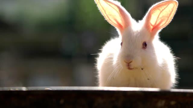 single rabbits - rabbit animal stock videos and b-roll footage