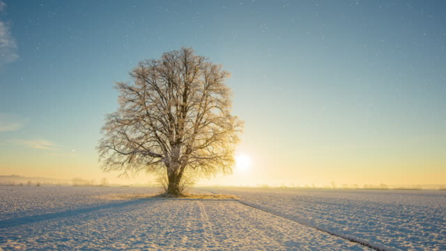 t/l single tree at sunrise in autumn and winter - le quattro stagioni video stock e b–roll