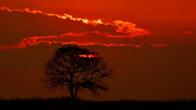 single tree at sunset time lapse - single tree stock videos & royalty-free footage