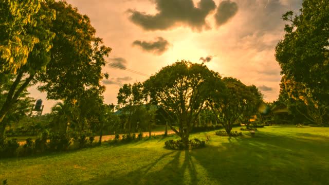 vidéos et rushes de arbre simple au coucher du soleil time lapse - image dépouillée
