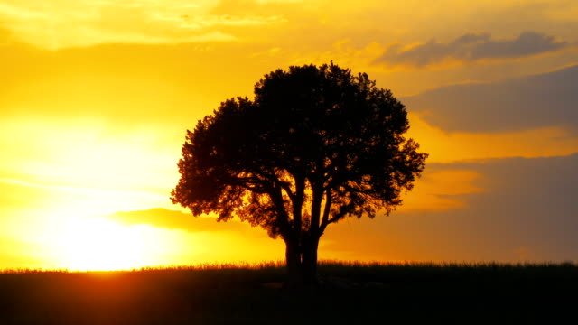 single tree at sunset - single tree stock videos & royalty-free footage