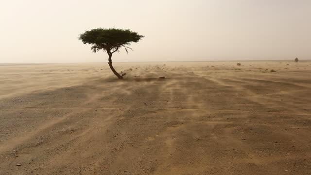 single tree in a sands storm in desert sahara, morocco - sahara desert stock videos & royalty-free footage