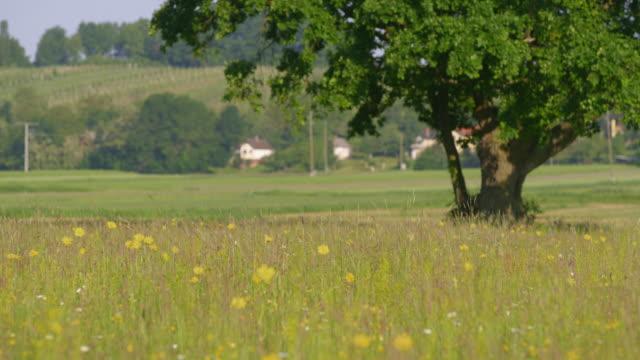 晴れた日の春の草原のds単一の木 - ワイドショット点の映像素材/bロール