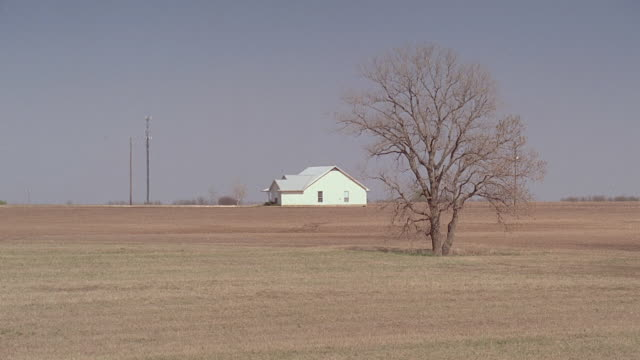 WS Single tree in brown, dusty field with farmhouse in background / Kaufman, Texas, United States
