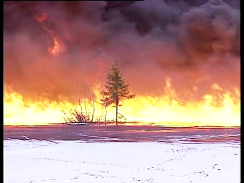 single tree in foreground with large area of burning oil in background, komi region, russia. - single tree stock videos & royalty-free footage