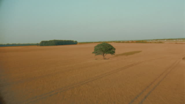 vídeos de stock, filmes e b-roll de aerial single tree in golden wheat field / shottesbrooke, berkshire, england - horizonte