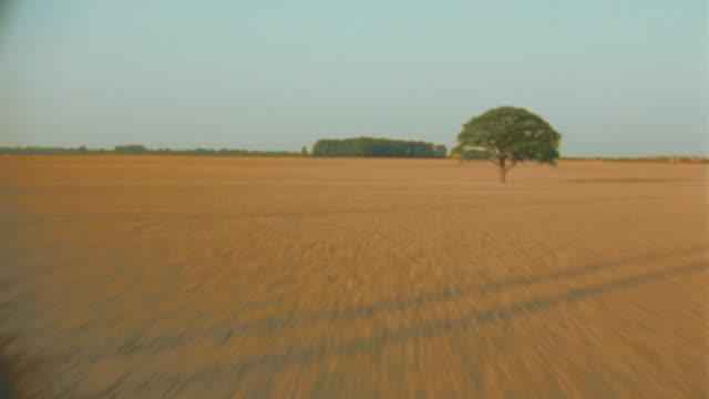 aerial single tree in golden wheat field / shottesbrooke, berkshire, england - horizon stock videos & royalty-free footage