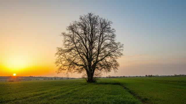 ds single tree in springtime at sunrise - single tree stock videos & royalty-free footage