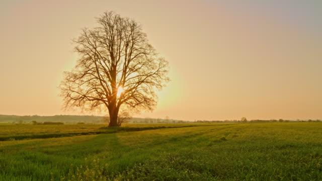 ds-single tree im frühling - graspflanze stock-videos und b-roll-filmmaterial