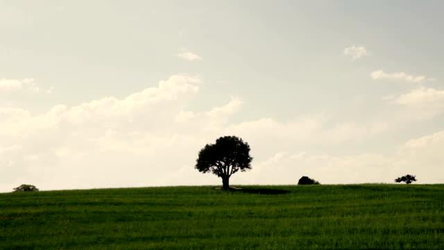 草原の一本の木 - 一つ点の映像素材/bロール