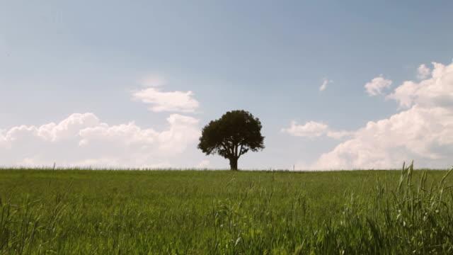 single tree in the meadow - single tree stock videos & royalty-free footage