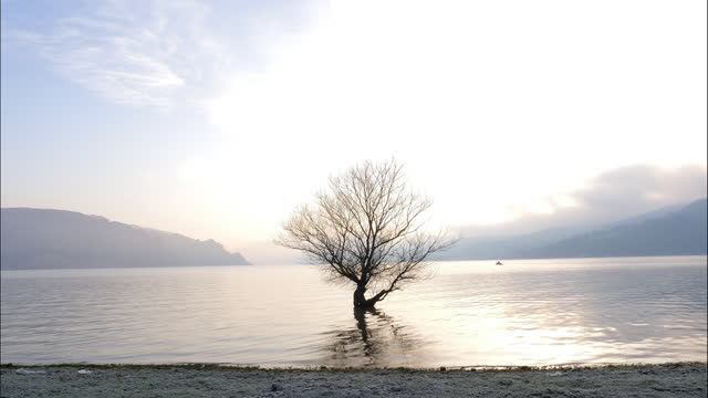 a single tree in the water. beauty in nature - majestic stock videos & royalty-free footage