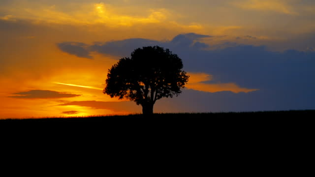美しい夕日の上のシングルツリー - 一つ点の映像素材/bロール
