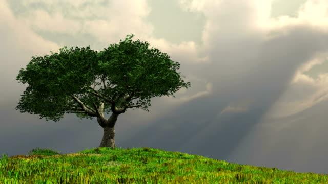 single tree on hill - single tree stock videos & royalty-free footage