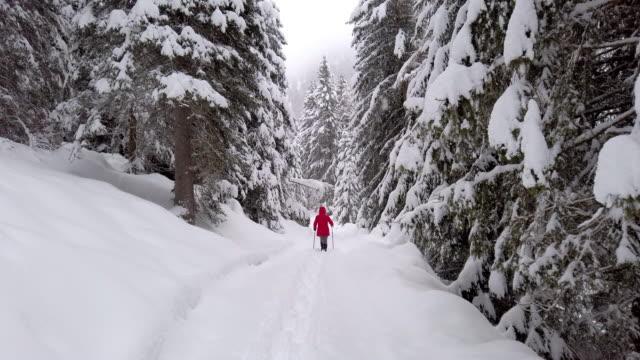 vídeos de stock e filmes b-roll de single woman snowshoeing in alpine winter forest - bastão de esqui