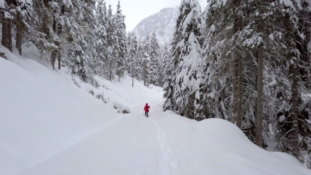 single woman snowshoeing in alpine winter forest - trentino alto adige stock videos & royalty-free footage