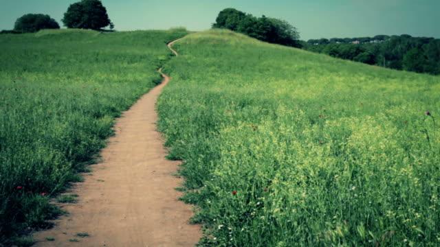 Singletrack path in nature