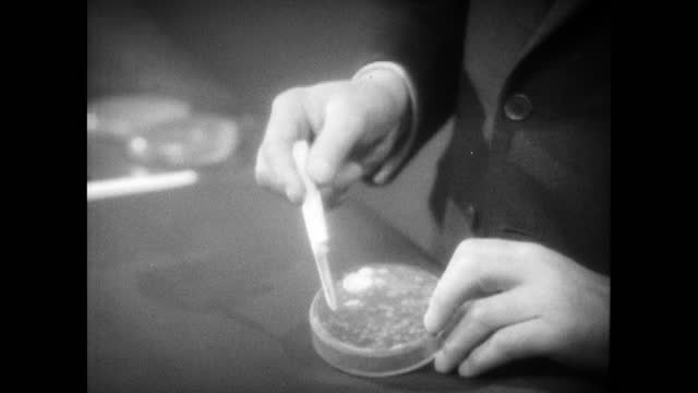 sir alexander fleming shows the original petri dish in which he observed mould growing in a dish of staphylococci bacteria that led to the discovery... - bacterium stock videos & royalty-free footage