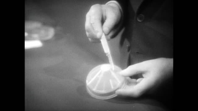 sir alexander fleming shows the petri dishes, containing the original mould and staphylococci bacteria, that were used in an experiment to observe... - bacterium stock videos & royalty-free footage