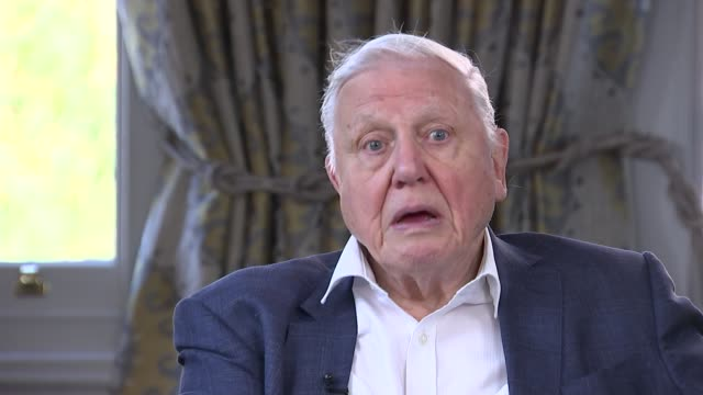 sir david attenborough interview; england: london: int sir david attenborough interview sot q: do you believe in need to make lifestyle changes e.g.... - interview raw footage stock videos & royalty-free footage