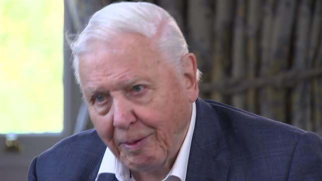 sir david attenborough interview london sir david attenborough interview sot q how do we get onto another level of committed discourse i suspect the... - business stock videos & royalty-free footage