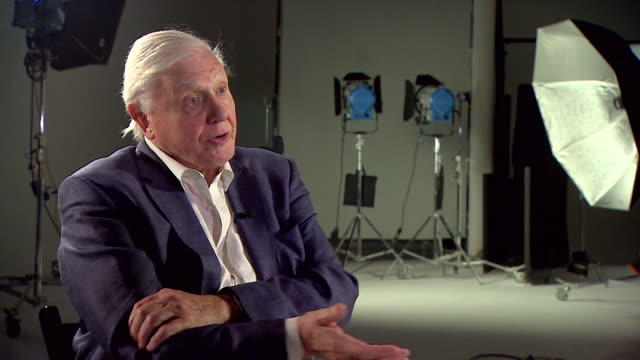 sir david attenborough saying he has been spending his life trying to explain how the natural world works and how it affects the way humans live - planet earth stock videos & royalty-free footage