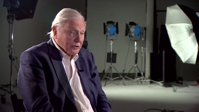 sir david attenborough saying 'the people's seat' at the upcoming un climate change conference in poland represents people wanting to stop climate... - chair stock videos & royalty-free footage