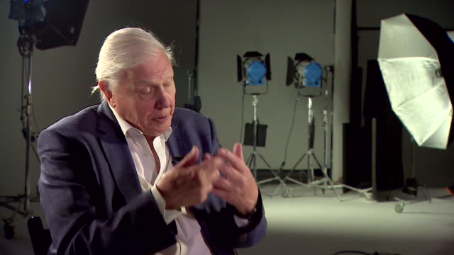 "sir david attenborough saying ""we human beings depend on the health of the natural world for every breath of air we breathe"" - planet earth stock videos & royalty-free footage"