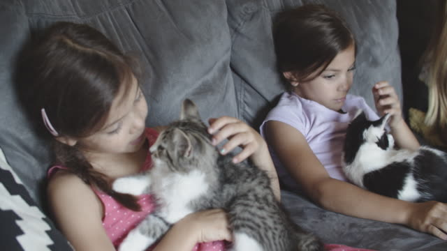 sisters hanging out at home with their pet kittens - stroking stock videos & royalty-free footage