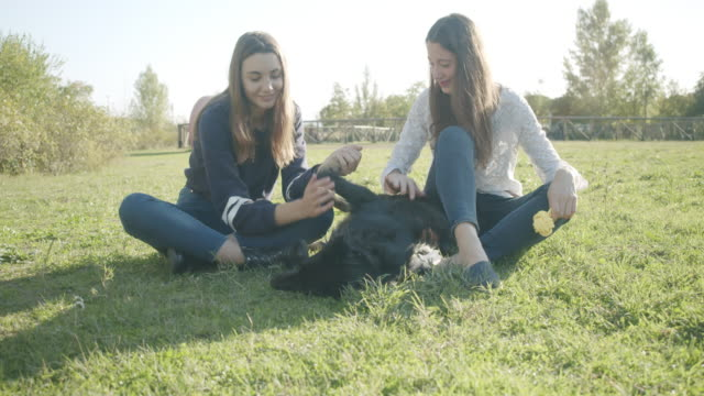 sisters petting dog - inquadratura fissa video stock e b–roll