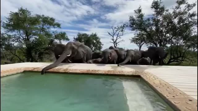 sitting in the comfort of your own plunge pool while admiring the african wildlife in front of you is a holiday experience never to be forgotten.... - take that stock videos & royalty-free footage
