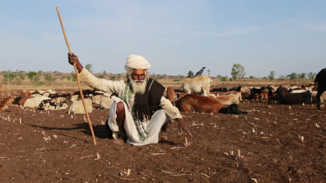 stockvideo's en b-roll-footage met sitting indian shepherd with turban in traditional clothes at work on a dry field. as hindu man he is signed with a yellow tilaka. in the background... - hoofdtooi