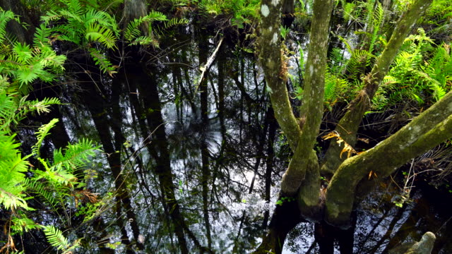 stockvideo's en b-roll-footage met six mile cypress slough preserve, fort myers, florida, usa, america - fort myers