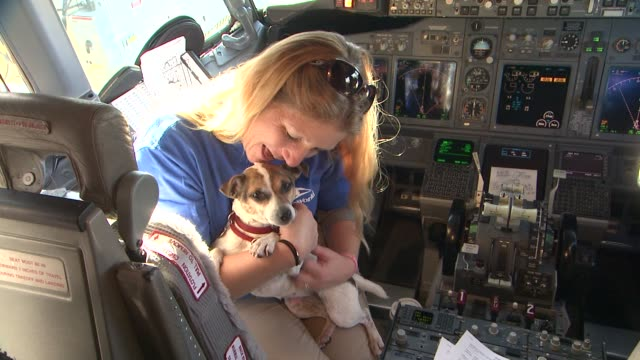 stockvideo's en b-roll-footage met sixty hurricane sandy pets take charter flight to new holiday home at newark liberty international airport on november 17 2012 in newark new jersey - new jersey
