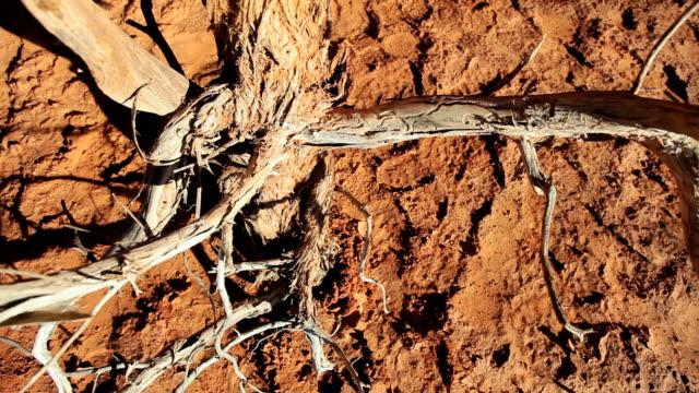 vídeos de stock, filmes e b-roll de ms zo skeletal branches of dead tree in  barren environment / utah,united states   - casca de árvore
