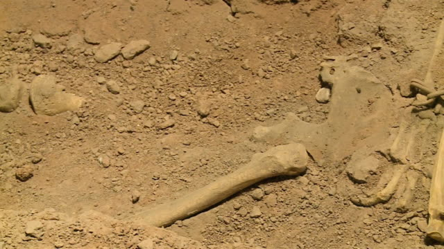 skeletal remains in the dirt - människoben bildbanksvideor och videomaterial från bakom kulisserna