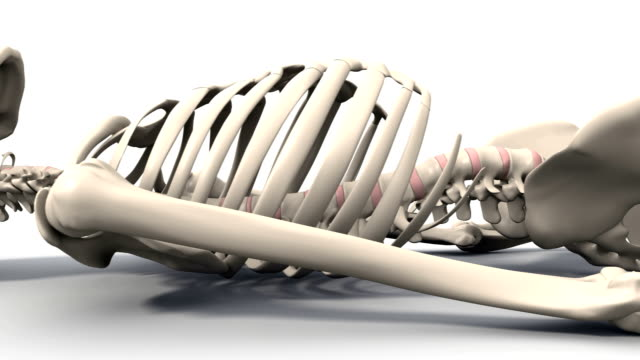 skeleton lying down, animation - biomedical illustration stock videos & royalty-free footage