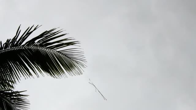 vídeos de stock, filmes e b-roll de esqueleto de kite abalada pelo vento - pipa brinquedo