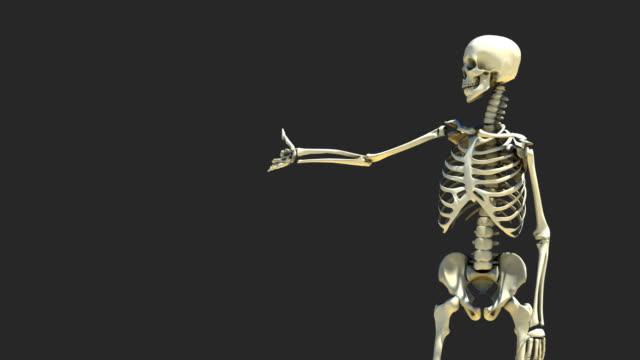 skelett präsentation 1 - menschliches skelett stock-videos und b-roll-filmmaterial