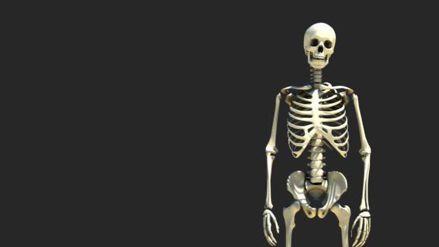 skelett präsentation 2 - menschliches skelett stock-videos und b-roll-filmmaterial